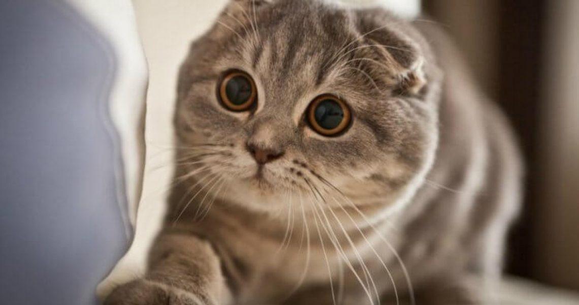 День кошки. Всемирный день, праздник кошек. Дата