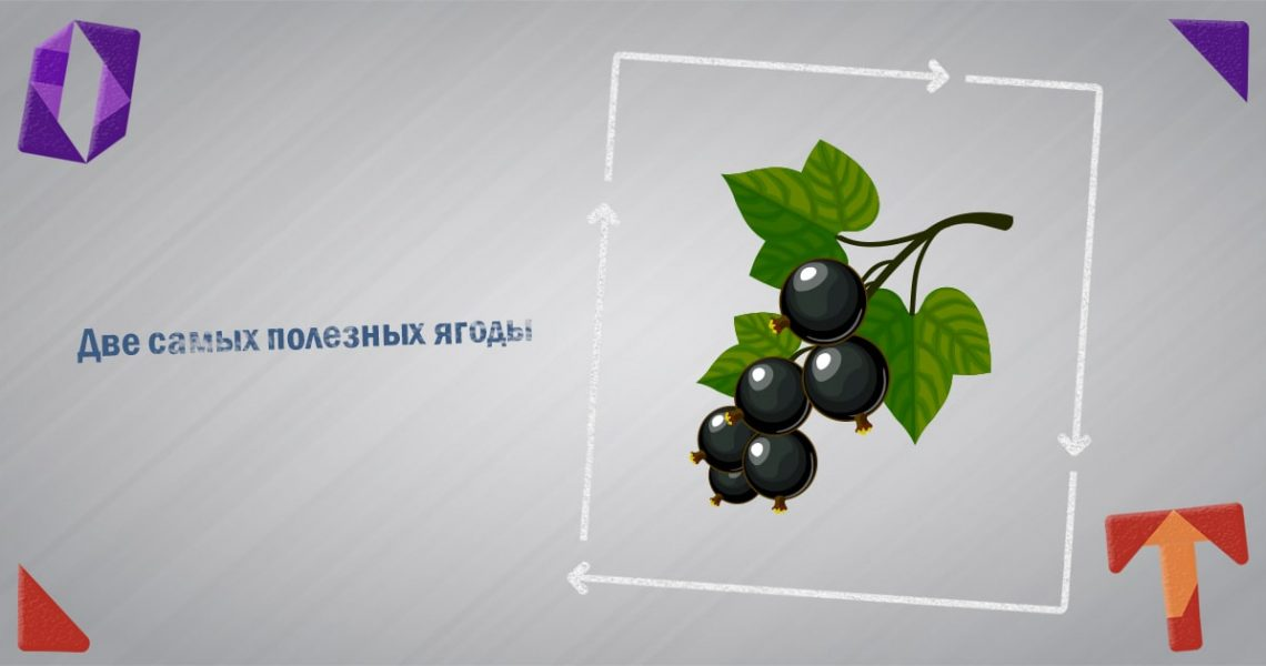 Две самых полезных ягоды Obmentovarov