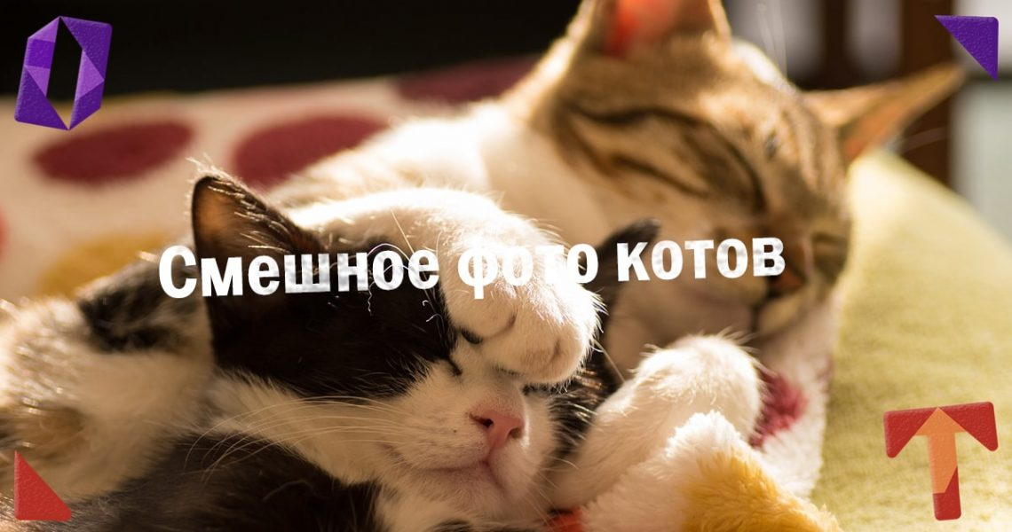 Смешное фото котов. Подборка. Obmentovarov